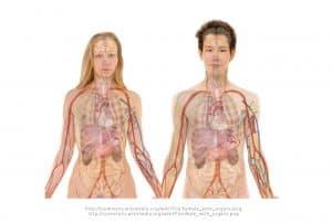 מחקר גוף האדם
